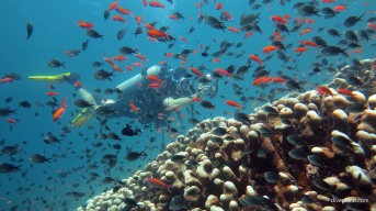 6556-Diver-obscured-by-fish-at-Turtle-Patch-diving-Sipadan-Malaysia-DPI-6556.jpg